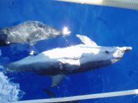 Croisière juin 2007 - p6290029